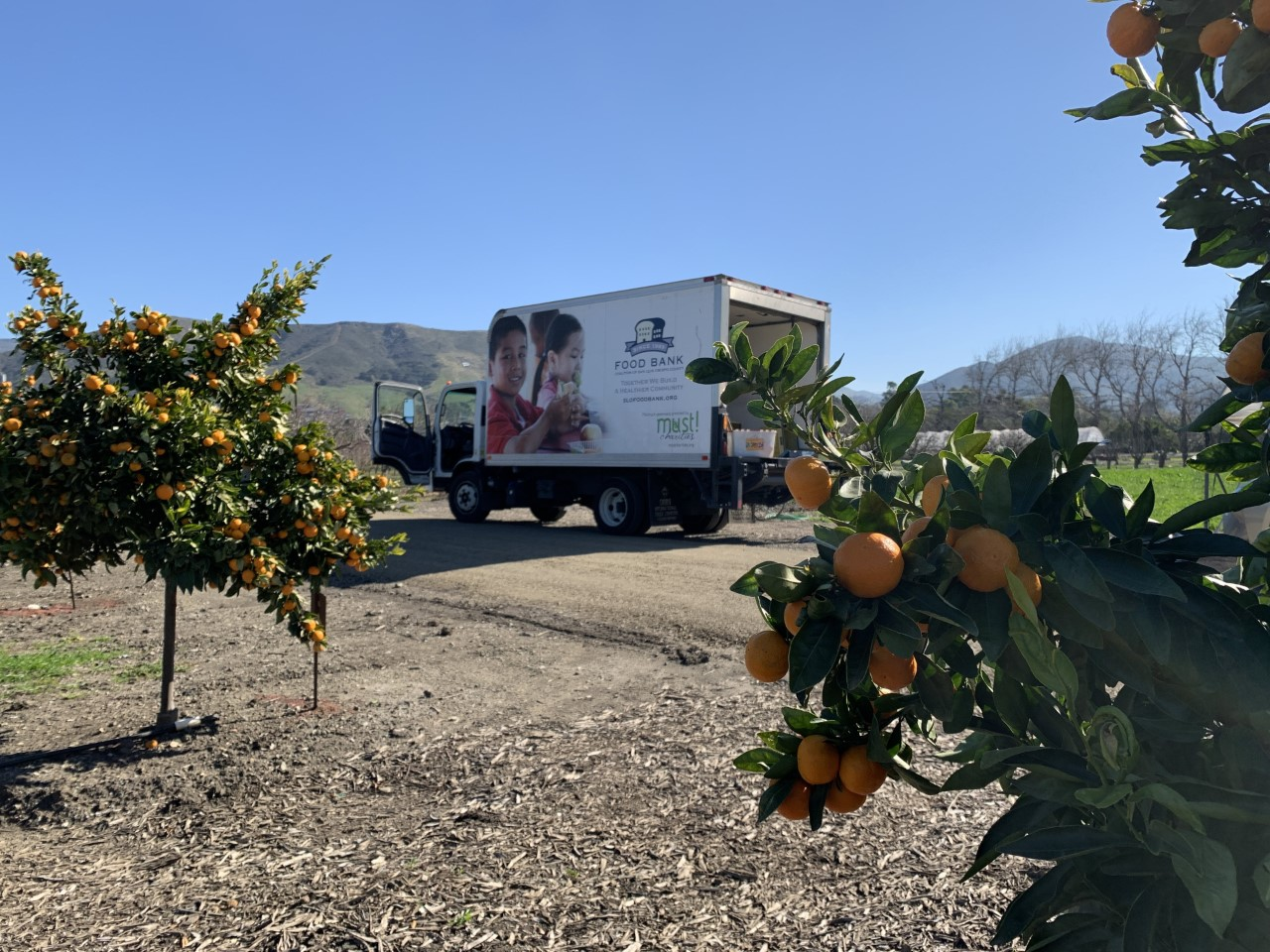 A truck from the San Luis Obispo Food Bank is parked near citrus trees in the Cal Poly Orchard.